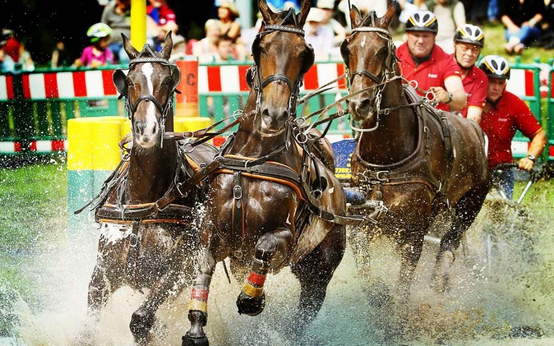 Pferdeversteigerung