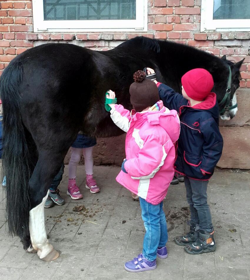 Erster Pferdeprojekttag der Kleinseelheimer Vorschulkinder