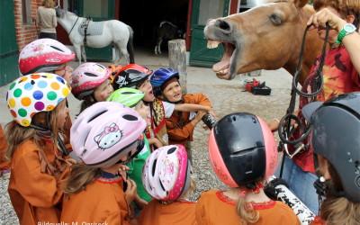 Pädagogische Konzepte mit dem Pferd – Der Pony-Führerschein®