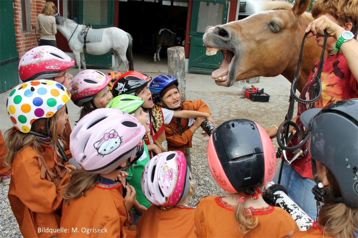 Der Pony-Führerschein® - Ein Reiterlebnis mit therapeutischem Ansatz