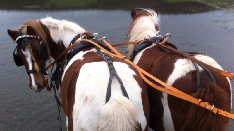 Pferdefairstand