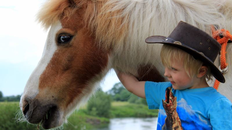 Pony-AllerLei