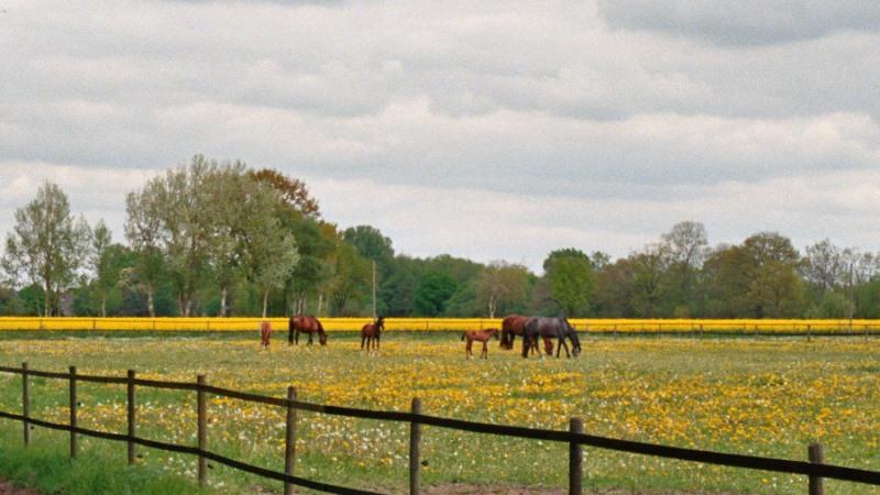 Kinderreitschule und Entwicklungsförderung mit dem Pferd Wiedenhof