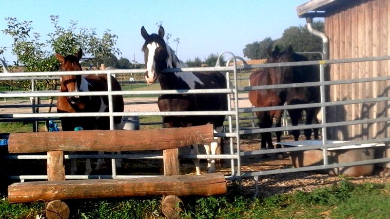 Pferde-Kinder-Abenteuer