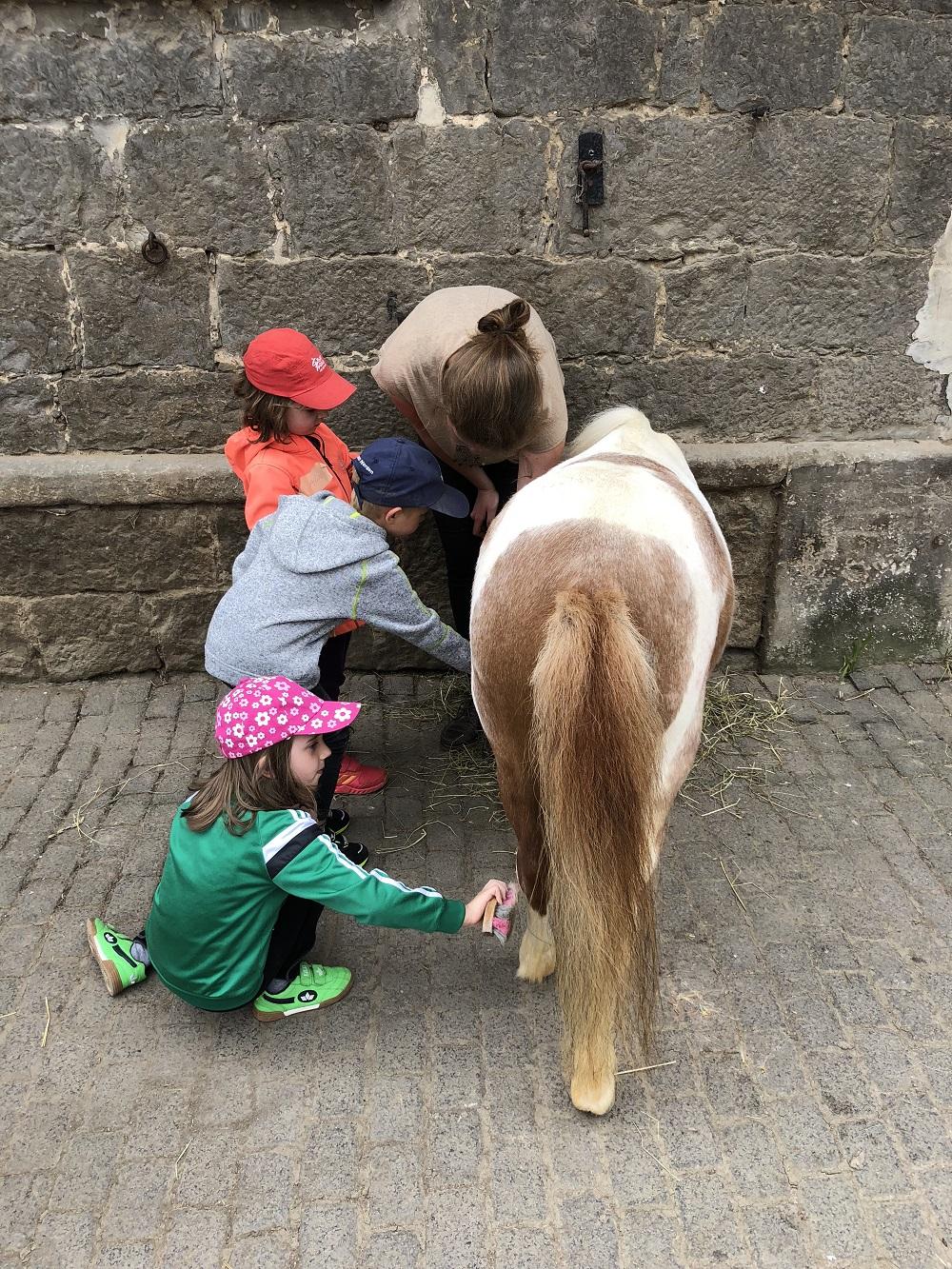 Kinder putzen Pony