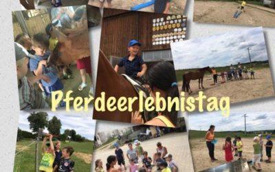 """Pferdezucht Mayer ermöglicht """"Pferdeerlebnistag"""""""