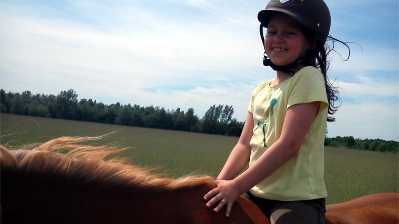 Pferdelernwerkstatt