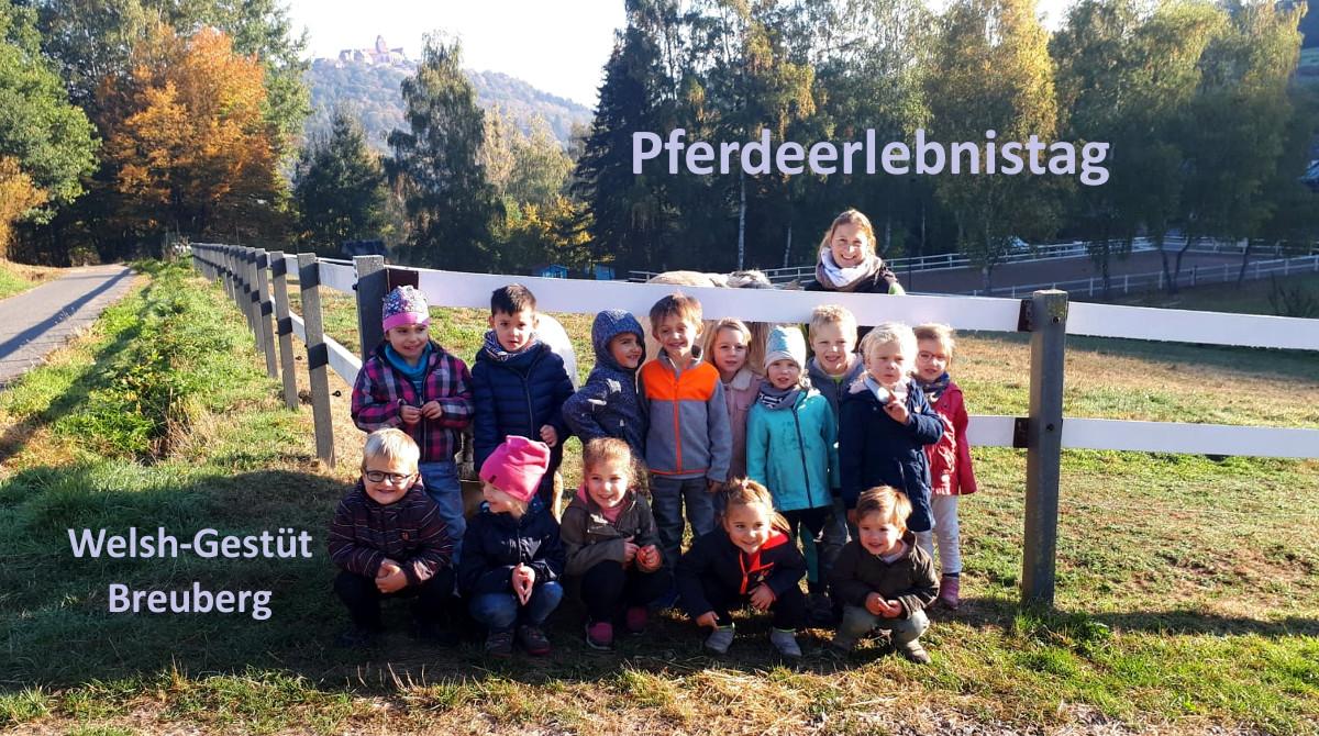 Pferdeerlebnistag - Welsh-Gestüt Breuberg - Pferde für unsere Kinder e.V.