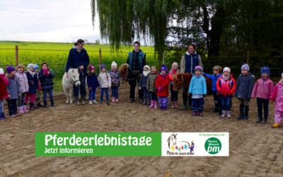 """""""Pferdeerlebnistag"""" bei den Pferdefreunden Brauerhof"""