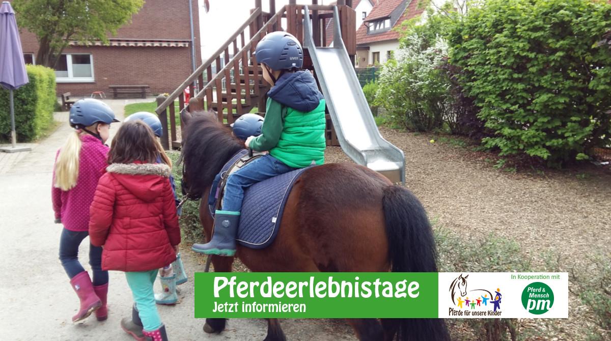 Pferdeerlebnistag Wolf-Friedrich - Pädagogik und Förderung mit Pony und Muli