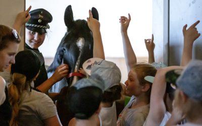 Ankündigung: Sächsischer Kindertag im Landgestüt Moritzburg