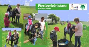 Sabine Fellner Krümelranch Tiefenthal Pferdeerlebnistag PfuKeV