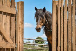 Pferde für unsere Kinder e.V.-Interview Zwergen-Ranch und Outdoor-Kindergarten Göhren 2019 (3)