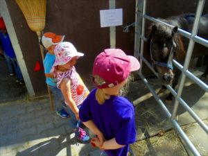 Pferdeerlebnistag Withopf Julia PfuKeV - Kinder und Pony