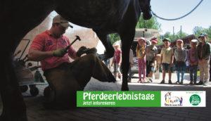 PfuKeV-Pferdeerlebnistag Reitschule Lena Bierling (14)