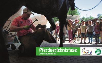 """""""Pferdeerlebnistag"""" in der Reitschule Bierling"""