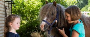 Kinder füttern Pony - Pferde für unsere Kinder e.V. - c Thomas Hellmann