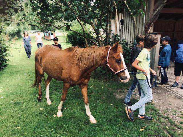 Pferde für unsere Kinder e.V. Pferdeerlebnistage - Andrea Zender Erlebnishof Wies (3)