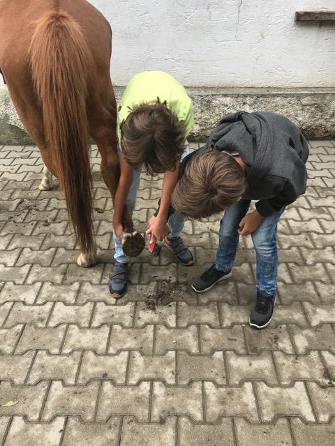 Pferde für unsere Kinder e.V. Pferdeerlebnistage - Andrea Zender Erlebnishof Wies (7)