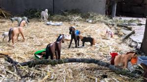 Ponyhof Lutz Pferdeerlebnistag - Pferde für unsere Kinder e.V.