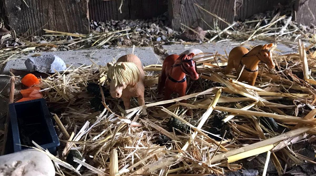 Ponyhof Lutz Pferdeerlebnistag - Pferde für unsere Kinder e.V. (III)