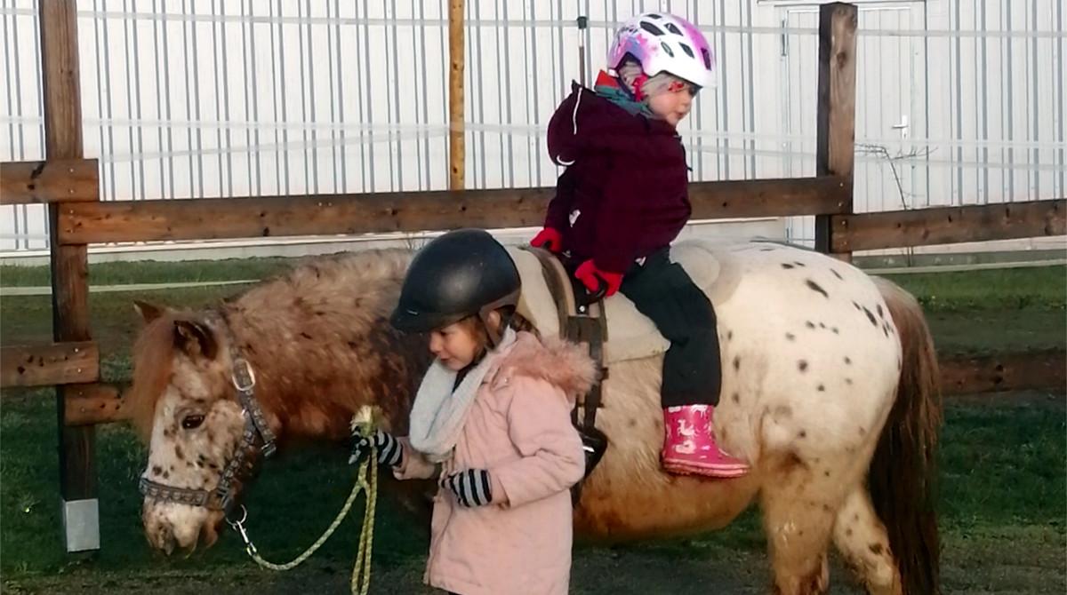 Stephanie Sauler - Schenke Kindern Zeit mit Pferden - Pferde für unsere Kinder e (2)