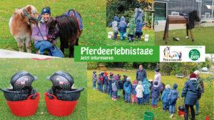 PferdeerlebnistagKatrin Rheinländer Mix Memmingen - c Monique Jauch